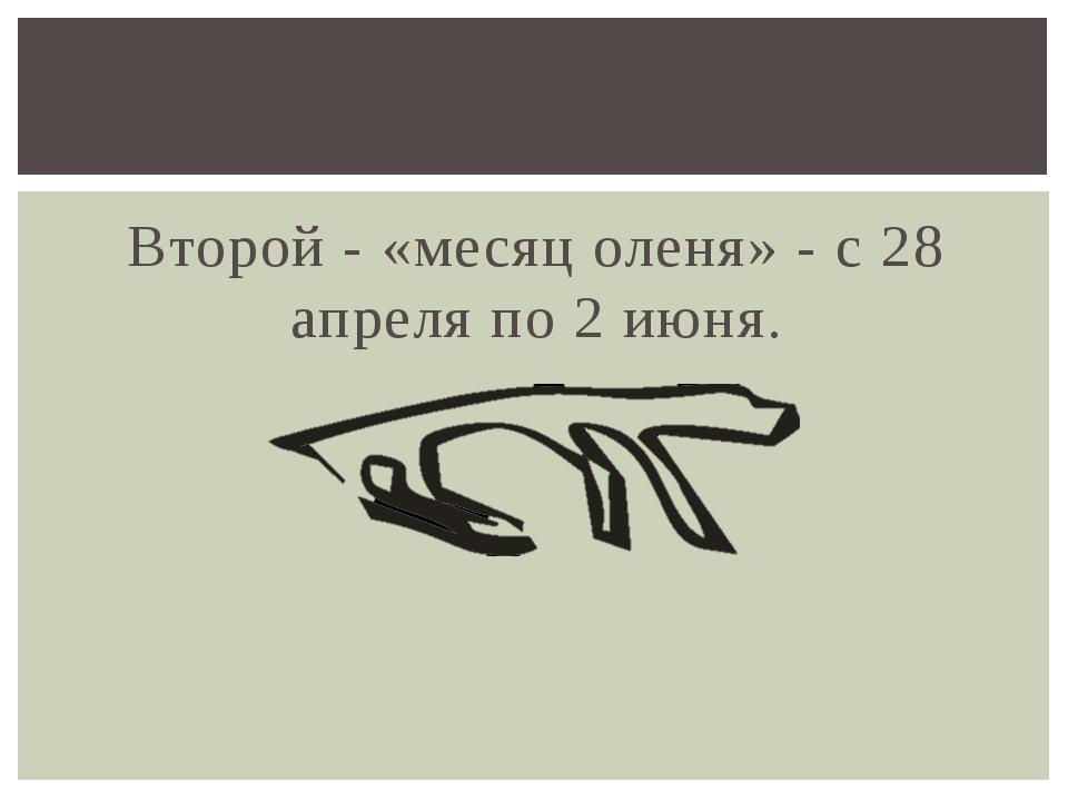 Второй - «месяц оленя» - с 28 апреля по 2 июня.