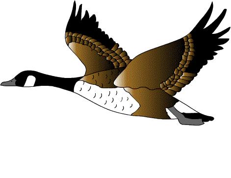 Анимация картинки утки, картинки дети улице