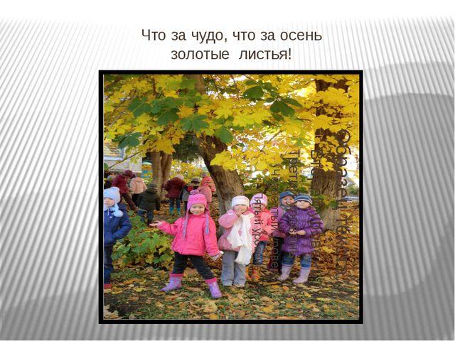 Что за чудо, что за осень золотые листья!