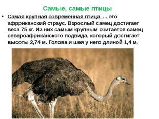 Самая крупная современная птица ... это афрриканский страус. Взрослый самец