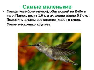 Самые маленькие Самцы колибри-пчелки), обитающей на Кубе и на о. Пинос, весят