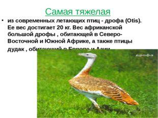 Самая тяжелая из современных летающих птиц - дрофа (Otis). Ее вес достигает 2