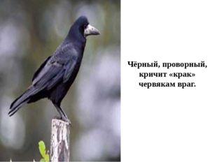 Чёрный, проворный, кричит «крак» червякам враг.