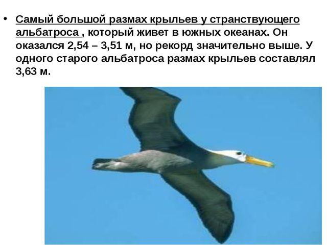 Самый большой размах крыльев у странствующего альбатроса , который живет в юж...