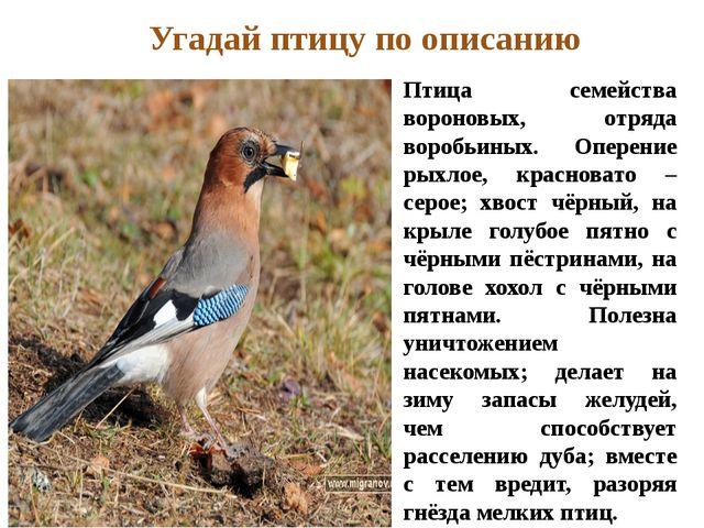 Птица семейства вороновых, отряда воробьиных. Оперение рыхлое, красновато – с...