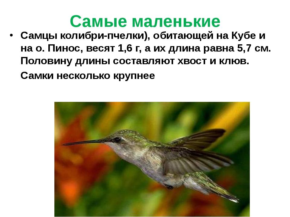 Самые маленькие Самцы колибри-пчелки), обитающей на Кубе и на о. Пинос, весят...