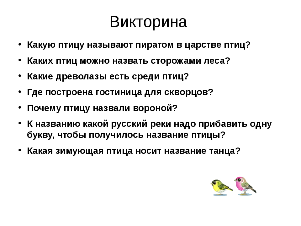 Викторина Какую птицу называют пиратом в царстве птиц? Каких птиц можно назва...
