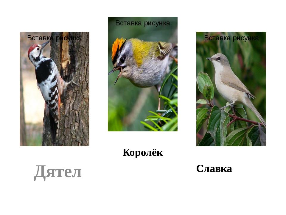 Дятел Королёк Славка
