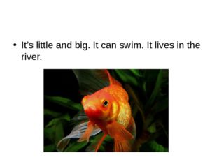 It's little and big. It can swim. It lives in the river.