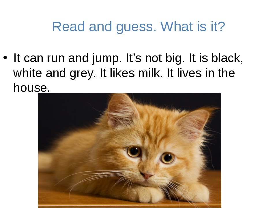 Read and guess. What is it? It can run and jump. It's not big. It is black, w...