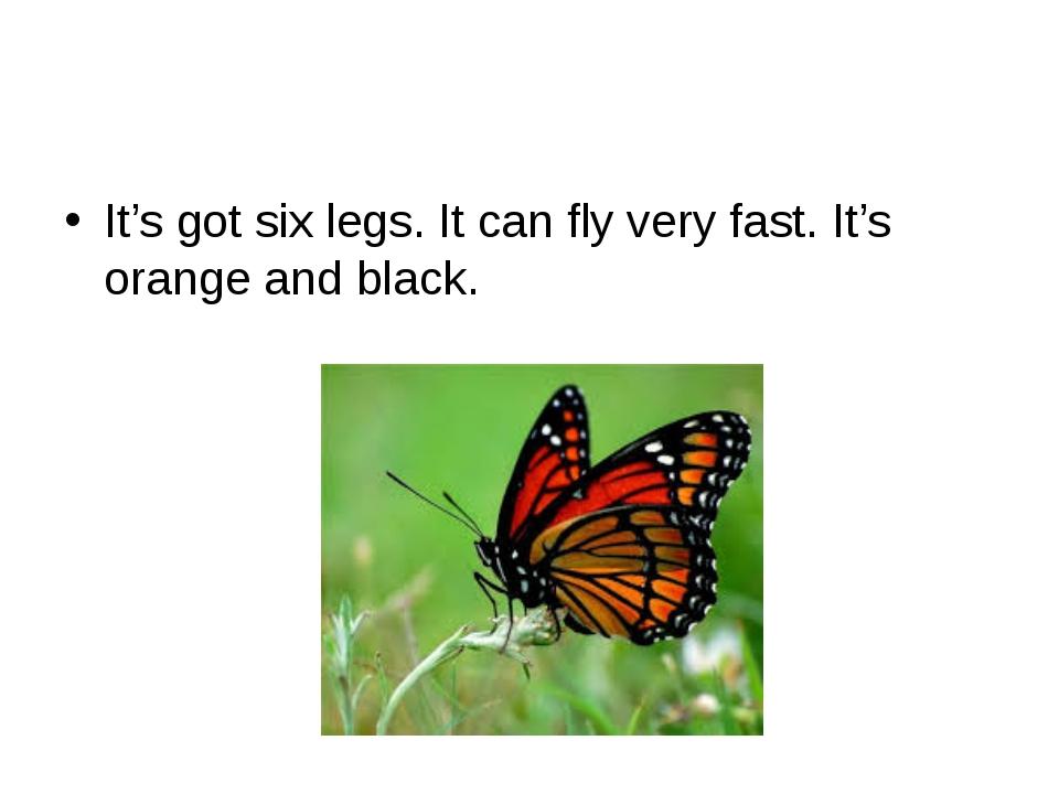 It's got six legs. It can fly very fast. It's orange and black.