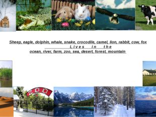 Sheep, eagle, dolphin, whale, snake, crocodile, camel, lion, rabbit, cow, fox