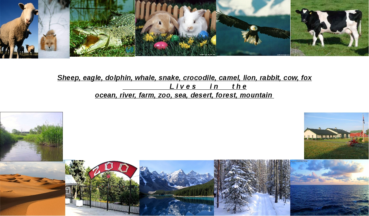 Sheep, eagle, dolphin, whale, snake, crocodile, camel, lion, rabbit, cow, fox...