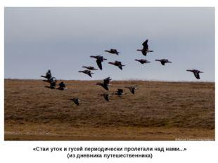 «Стаи уток и гусей периодически пролетали над нами...» (из дневника путешеств