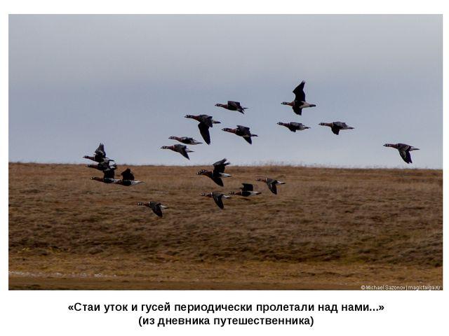 «Стаи уток и гусей периодически пролетали над нами...» (из дневника путешеств...