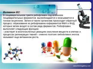 www.themegallery.com Витамин В2: В пищеварительном тракте рибофлавин под влия