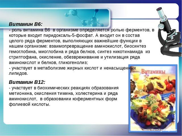 www.themegallery.com Витамин В6: - роль витамина В6 в организме определяется...