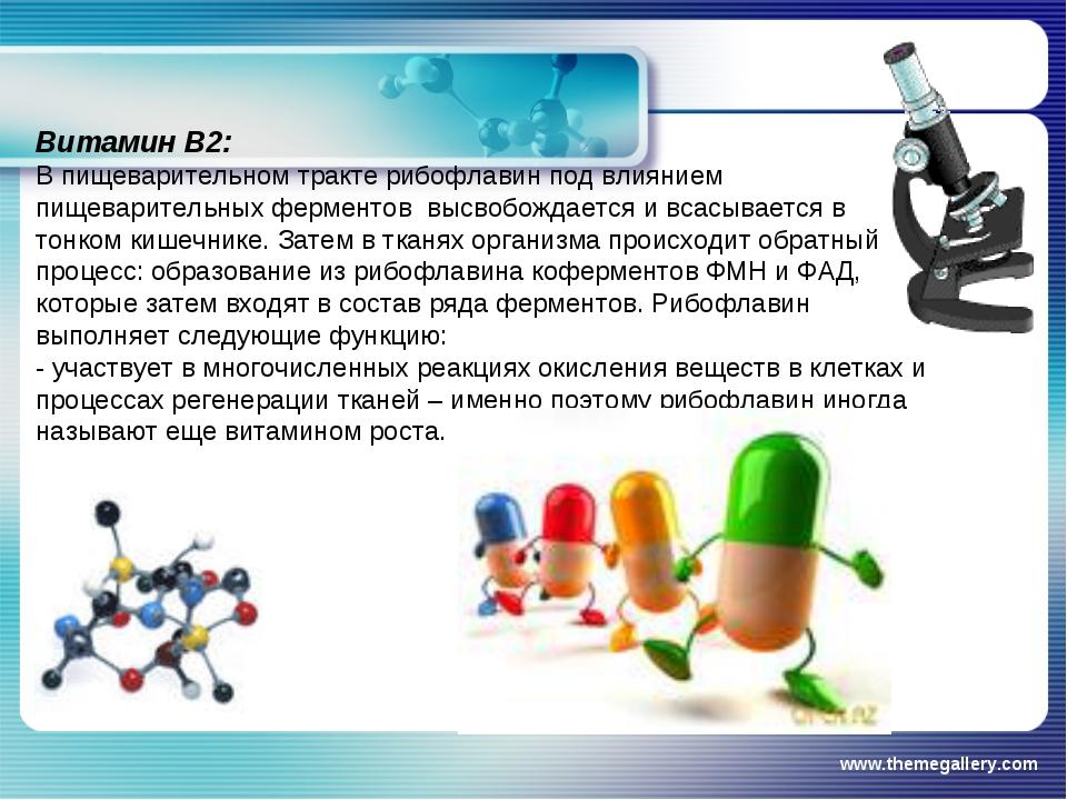 www.themegallery.com Витамин В2: В пищеварительном тракте рибофлавин под влия...