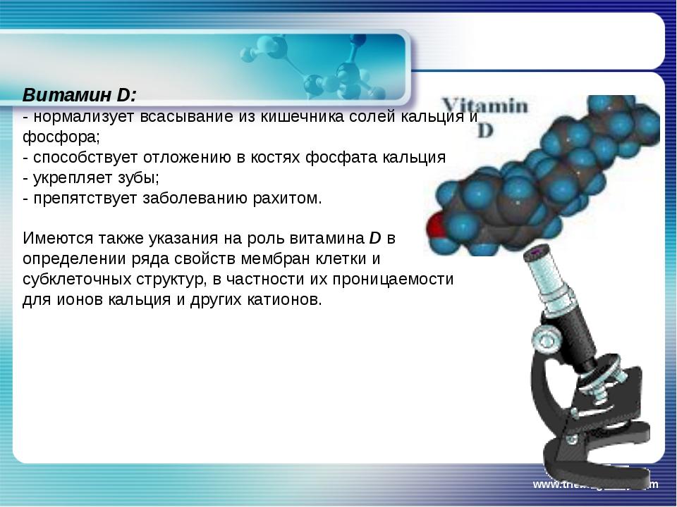 www.themegallery.com Витамин D: - нормализует всасывание из кишечника солей к...