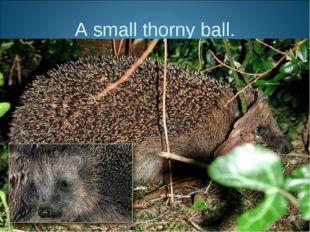 A small thorny ball.