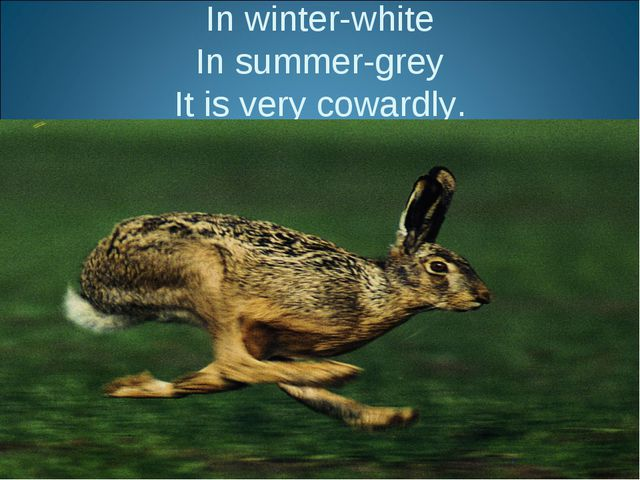 In winter-white In summer-grey It is very cowardly.