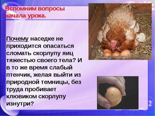 Почему наседке не приходится опасаться сломать скорлупу яиц тяжестью своего т...