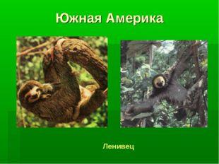 Южная Америка Ленивец
