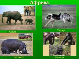 Африка Слон Страус Бегемот Горилла