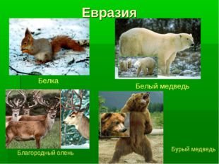 Евразия Белка Белый медведь Благородный олень Бурый медведь