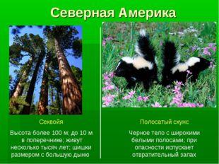 Северная Америка Секвойя Высота более 100 м; до 10 м в поперечнике; живут нес