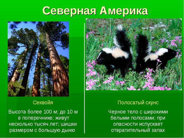 Северная Америка Секвойя Высота более 100 м; до 10 м в поперечнике; живут нес...