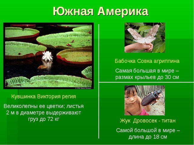 Южная Америка Кувшинка Виктория регия Великолепны ее цветки; листья 2 м в диа...