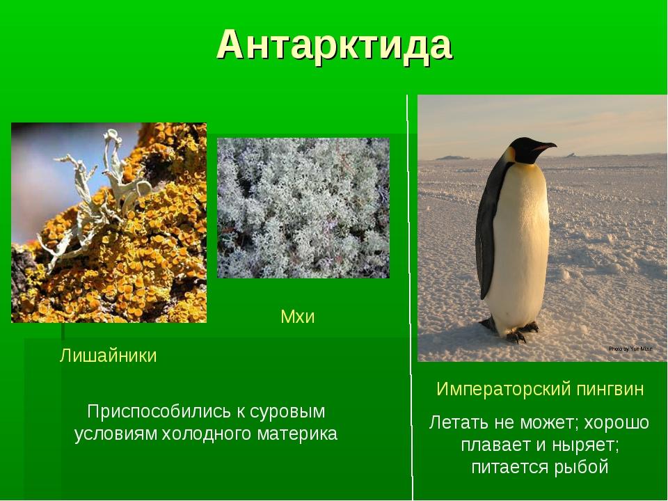 Антарктида Лишайники Мхи Приспособились к суровым условиям холодного материка...