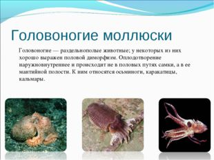 Головоногие моллюски Головоногие — раздельнополые животные; у некоторых из ни