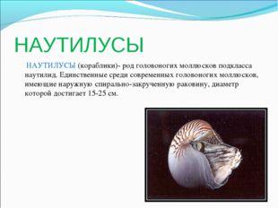 НАУТИЛУСЫ НАУТИЛУСЫ (кораблики)- род головоногих моллюсков подкласса наутилид