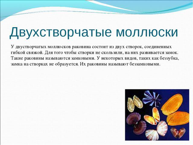 Двухстворчатые моллюски У двустворчатых моллюсков раковина состоит из двух ст...
