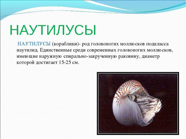 НАУТИЛУСЫ НАУТИЛУСЫ (кораблики)- род головоногих моллюсков подкласса наутилид...