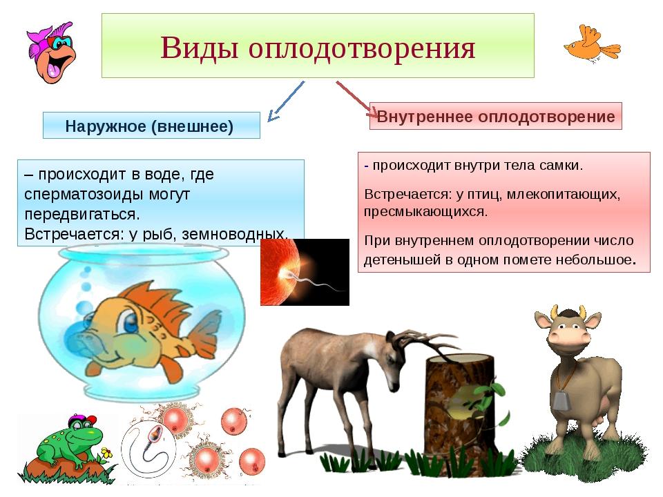 Виды оплодотворения - происходит внутри тела самки. Встречается: у птиц, млек...