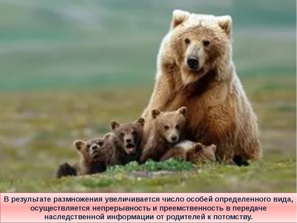 В результате размножения увеличивается число особей определенного вида, осуще...