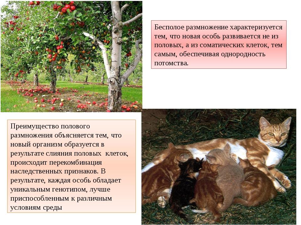 Бесполое размножение характеризуется тем, что новая особь развивается не из п...