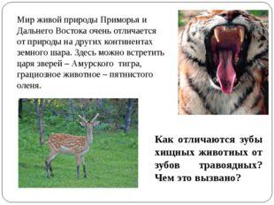 Мир живой природы Приморья и Дальнего Востока очень отличается от природы на