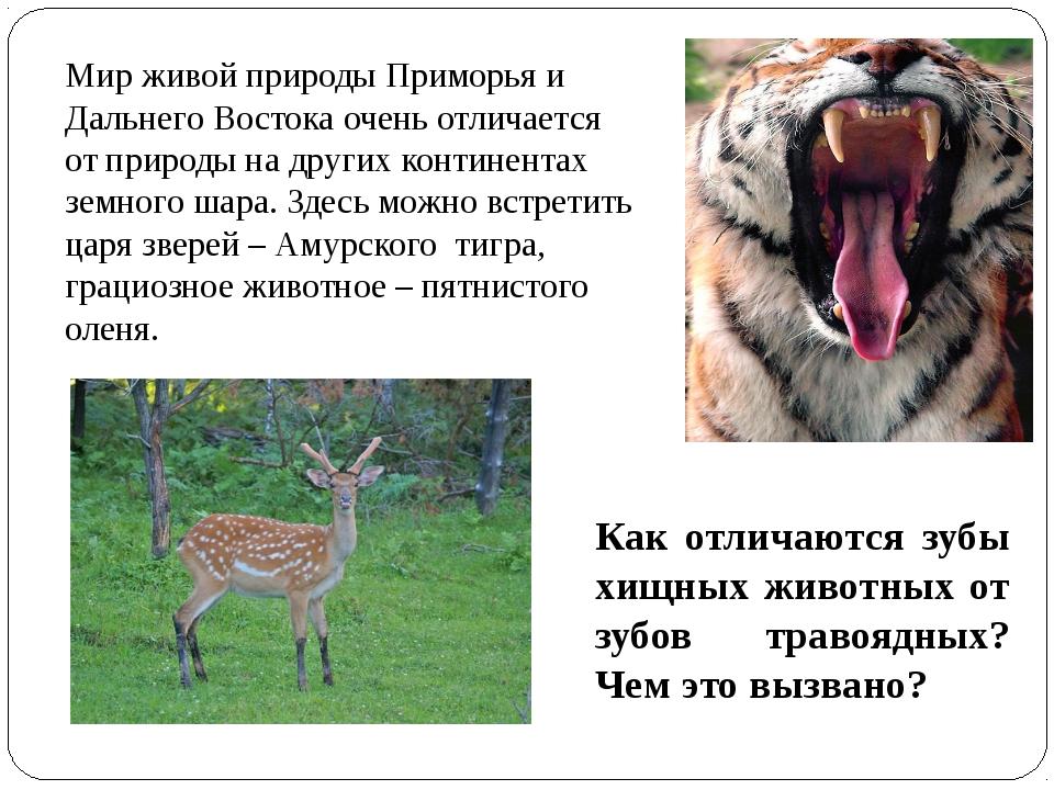 Мир живой природы Приморья и Дальнего Востока очень отличается от природы на...