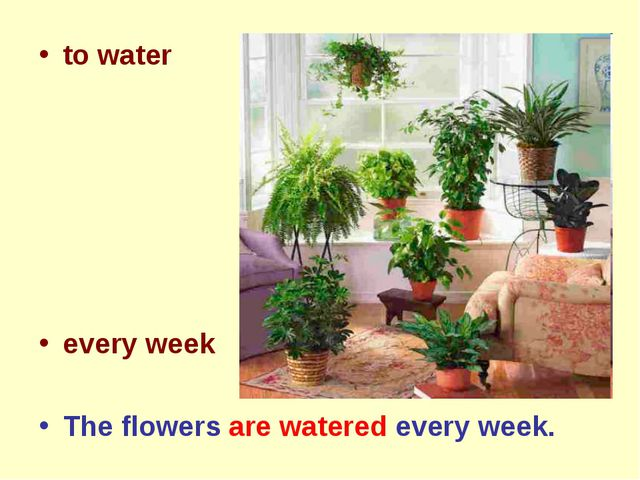 to water every week The flowers are watered every week.