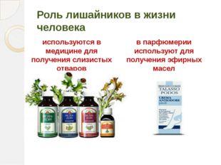 Роль лишайников в жизни человека используются в медицине для получения слизис