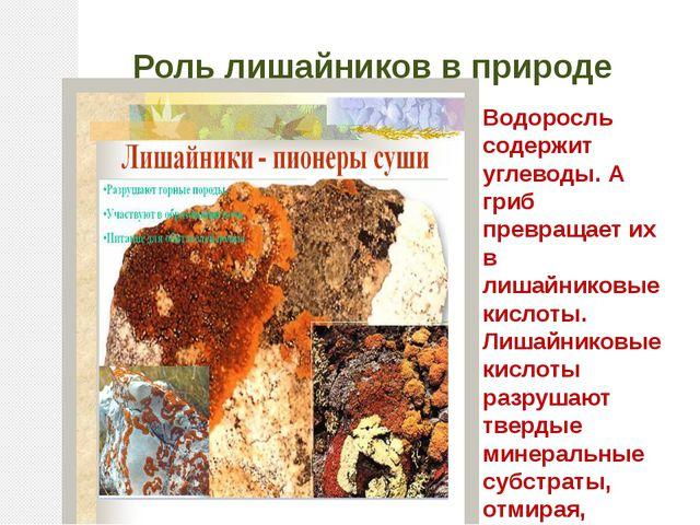 Роль лишайников в природе Водоросль содержит углеводы. А гриб превращает их в...
