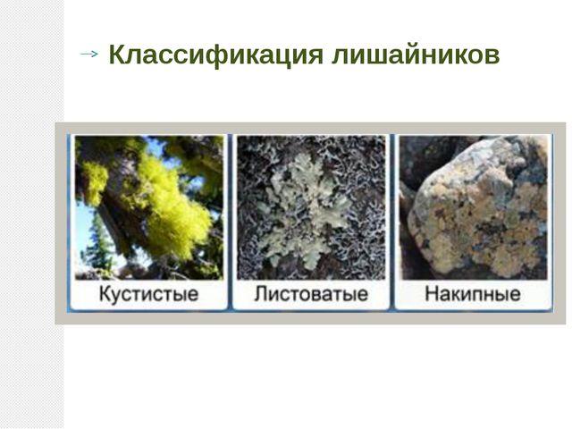 Классификация лишайников