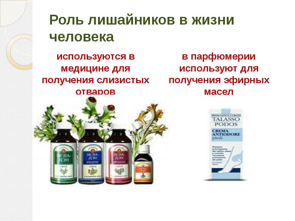 Роль лишайников в жизни человека используются в медицине для получения слизис...
