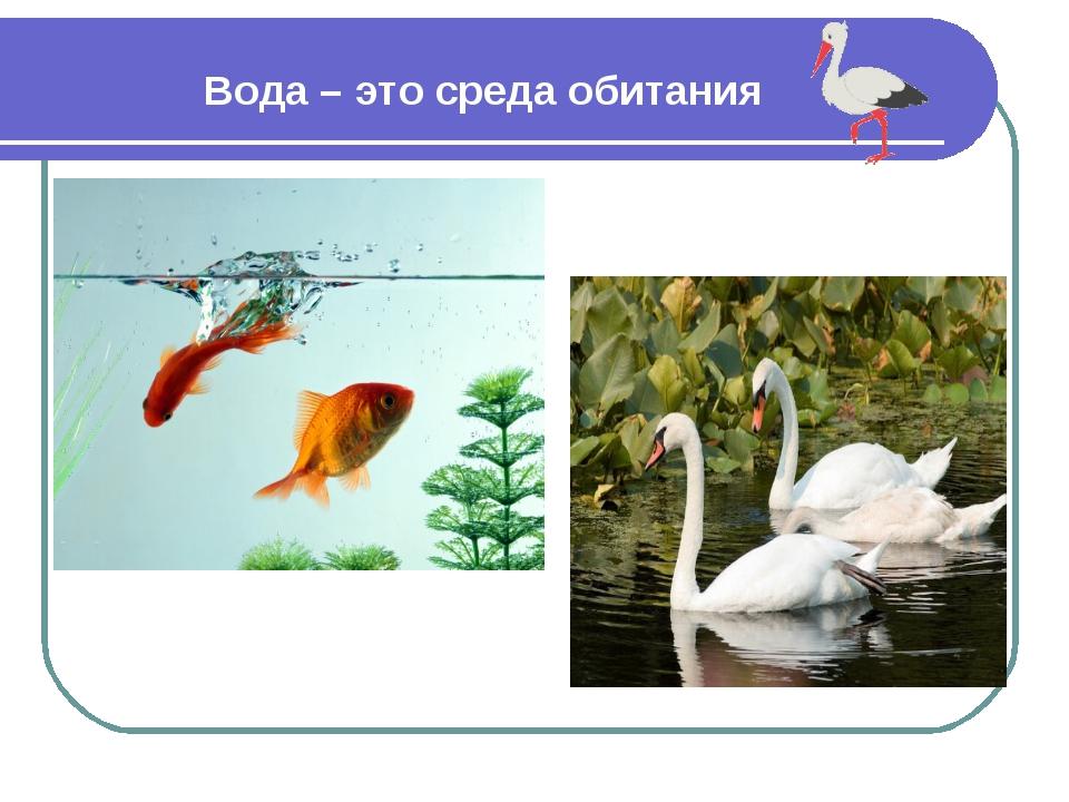 Вода – это среда обитания