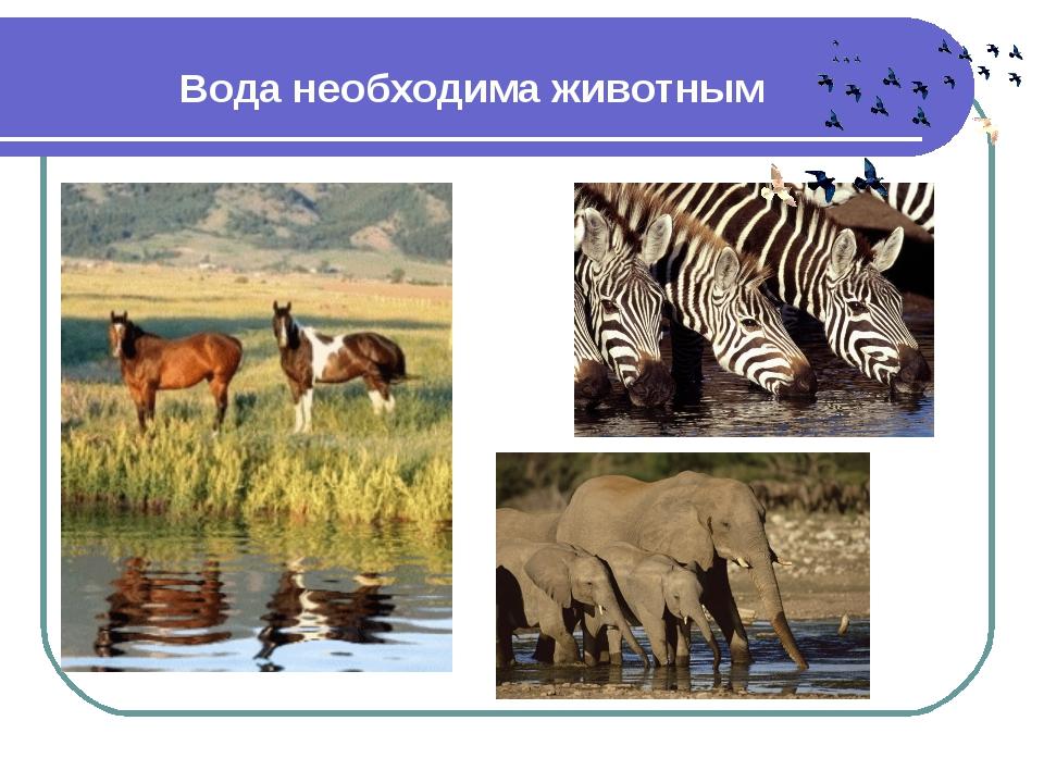 Вода необходима животным