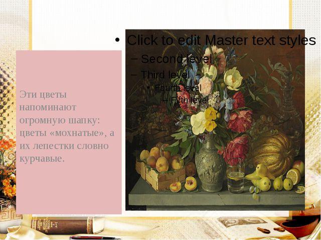 Эти цветы напоминают огромную шапку: цветы «мохнатые», а их лепестки словно...